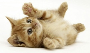 ru.belwh1sper.wallpaper.kittens.full_3.png